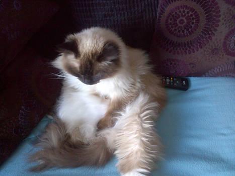 Lottie sitting on the sofa