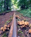 Mushrooms by wosicz