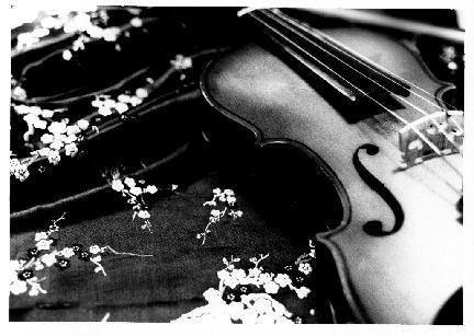 Violin by redLantern