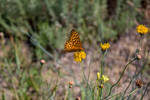 Orange Butterfly by artisticimposter