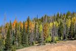 Autumn on Cedar Mountain (2)