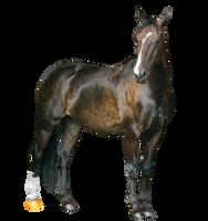 Bay Horse Precut by Hellofascination1991