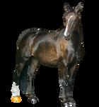 Bay Horse Precut
