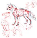 Rough Wolf Anatomy