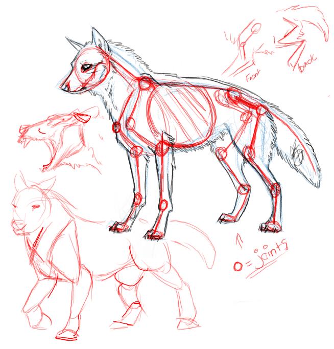 Wolf muscle anatomy