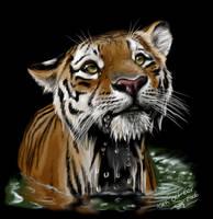 Tiger by ArtistMaz