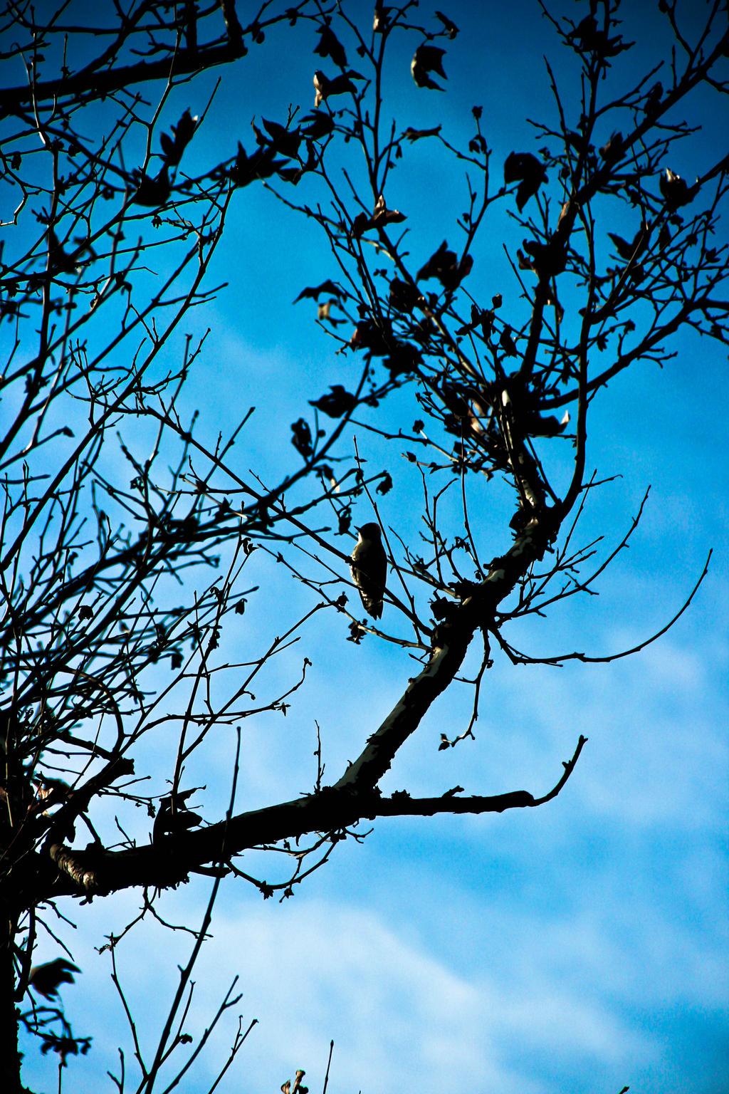 Blue Jay by heART-Werks