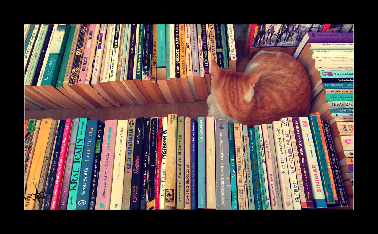 The reading cat by cradeloso