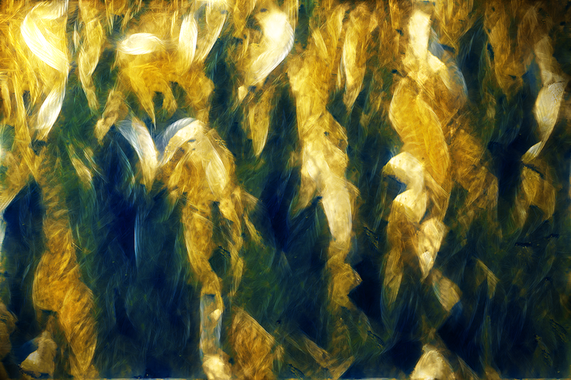 Abstract Ornamental - Texture by irn-bru