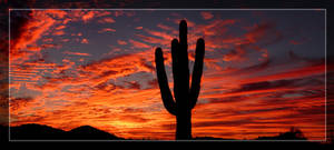Fiery Saguaro Silhouette