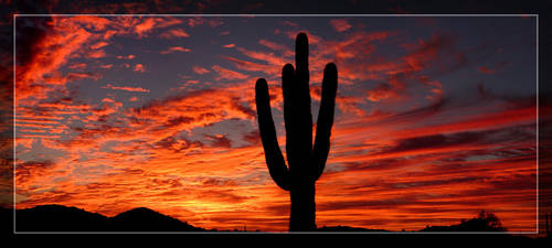 Fiery Saguaro Silhouette by Delusionist