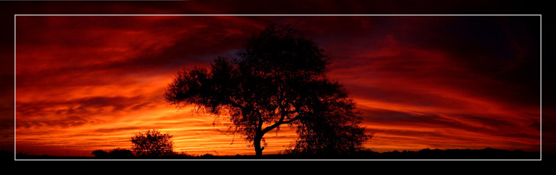 Fiery Mesquite Sunset
