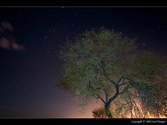 Starry Mesquite Nite by Delusionist