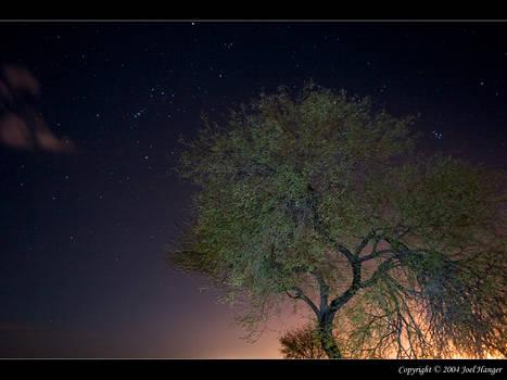Starry Mesquite Nite