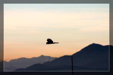 Soaring Hawk by Delusionist