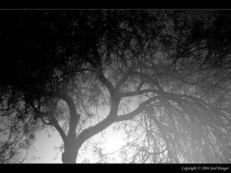 Mesquite Tree Night by Delusionist