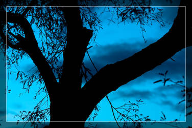 Mesquite Tree Blue Skies by Delusionist