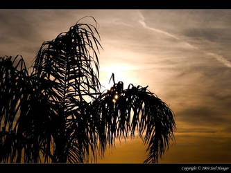 Palm Tree Silhouette by Delusionist