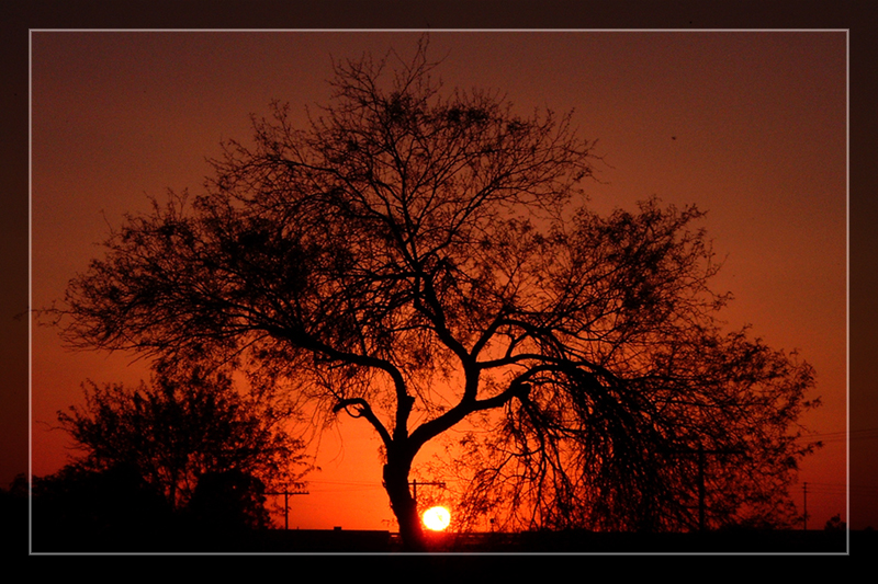 Mesquite Tree Sunset