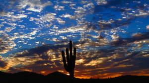 Cactus Sunset - Saguaro