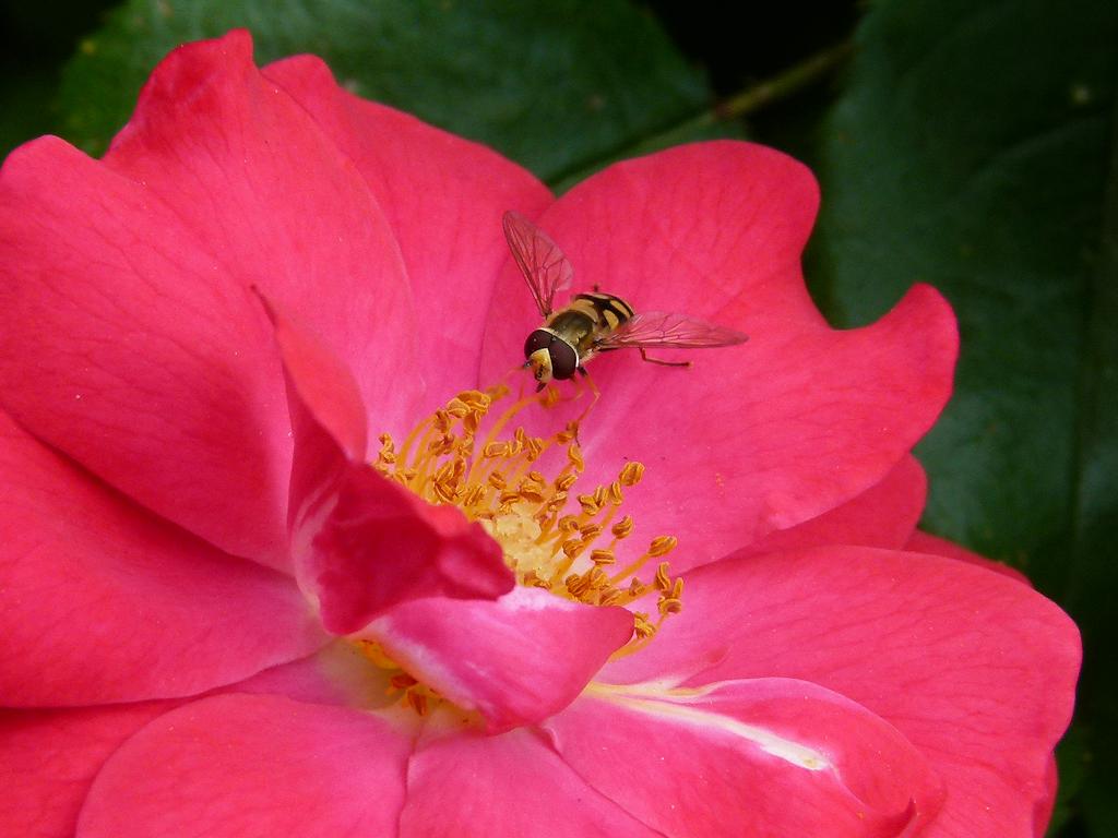 In the garden by annelouisa