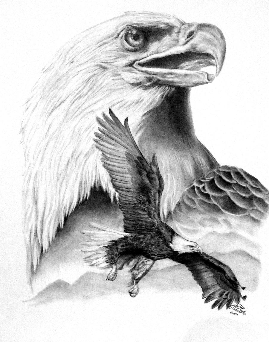 Bald Eagle Drawing Flying Pencil Drawings