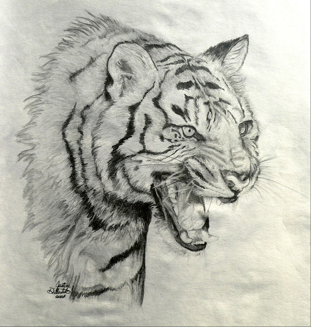 Roaring Tiger by FreedomSparrow3 on DeviantArt