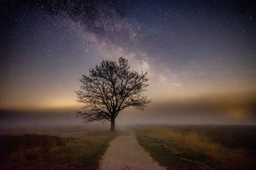 Tree on a Moor