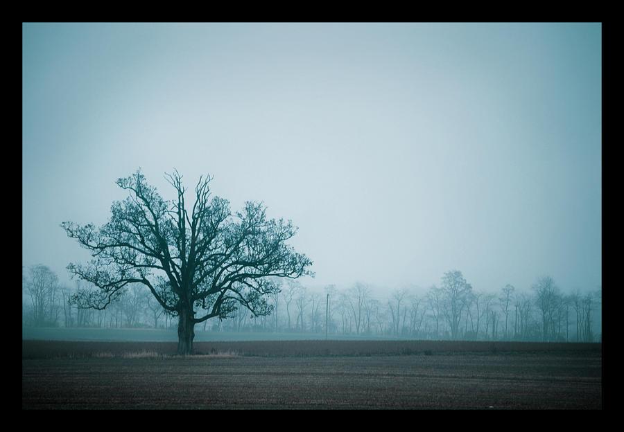 .Solitude. by crimson-ivory