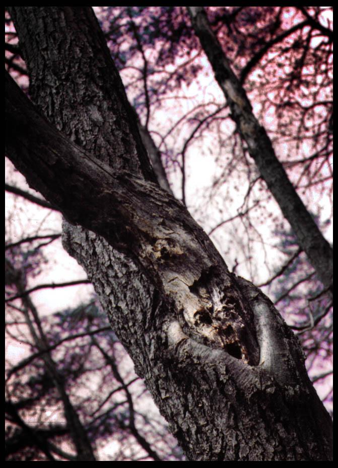 Banshee by crimson-ivory