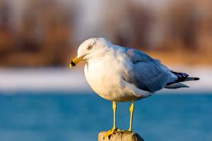 I'm An Albatross!