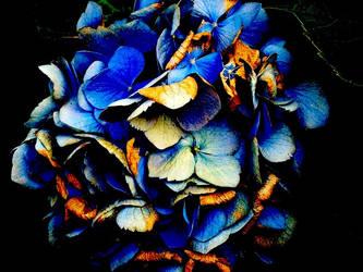 Blue by FrecklezRae