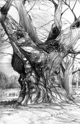 oak by NealDraper