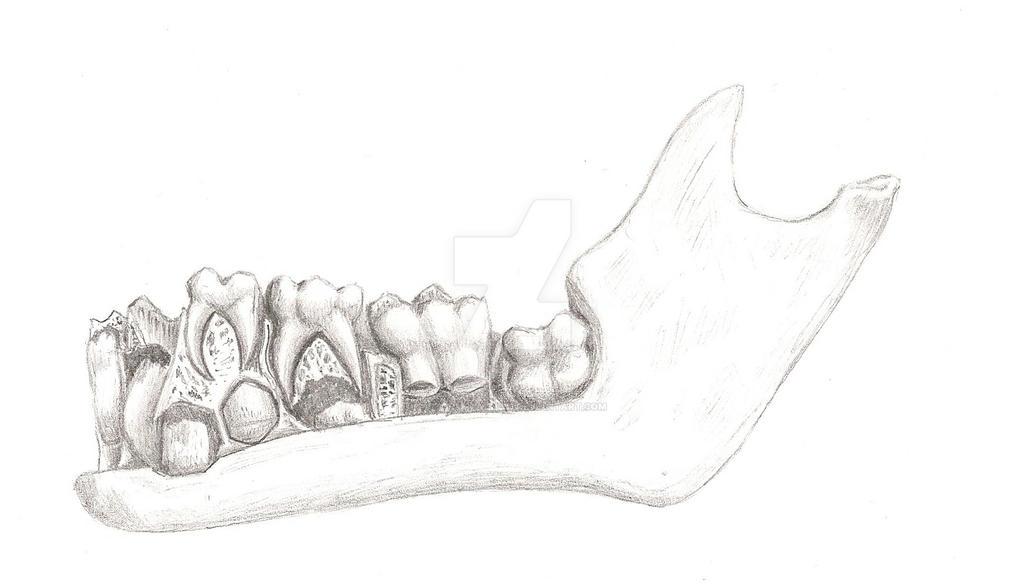 Bones 2 by StormRaven333
