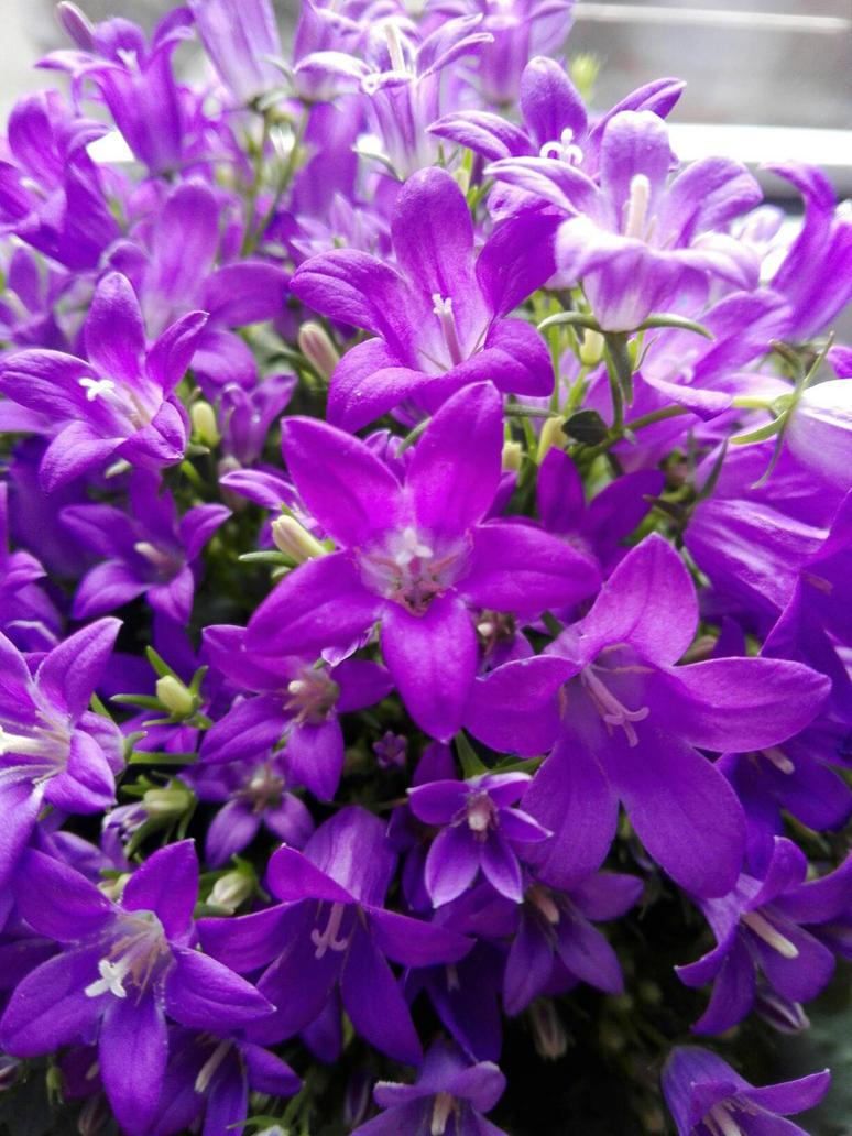 My New Flowers by 4ntoniax3