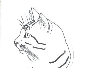 Maraccuu's Profile Picture