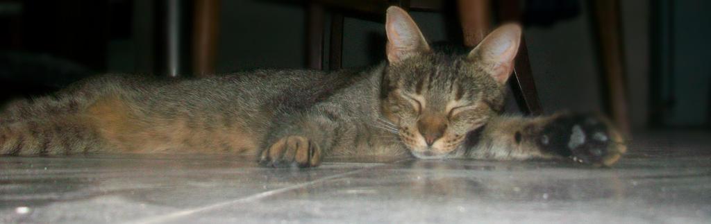 Beni sleeping on the floor by Maraccuu