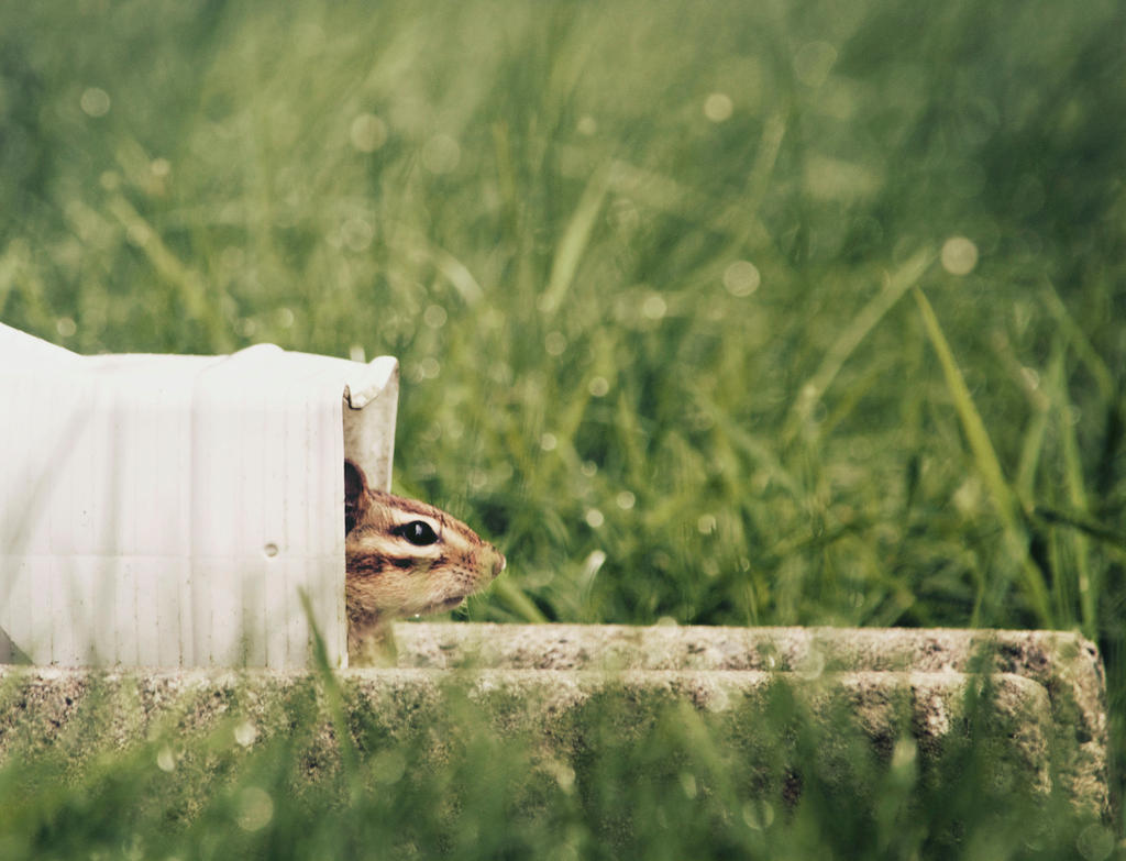 Chipmunk by PointVision