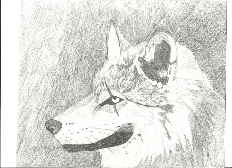 Scarred Wolf by Valthir on DeviantArt