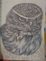 burrowing owl practice