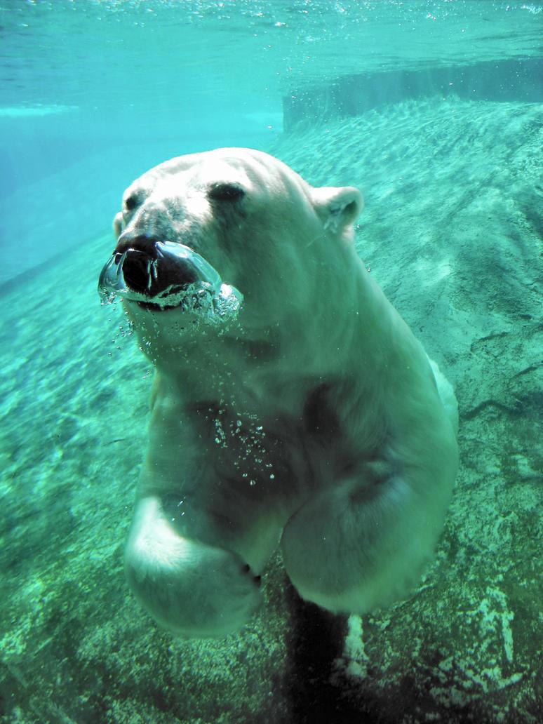 Polar bear by Small-Jessamine
