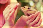 Hamster IV