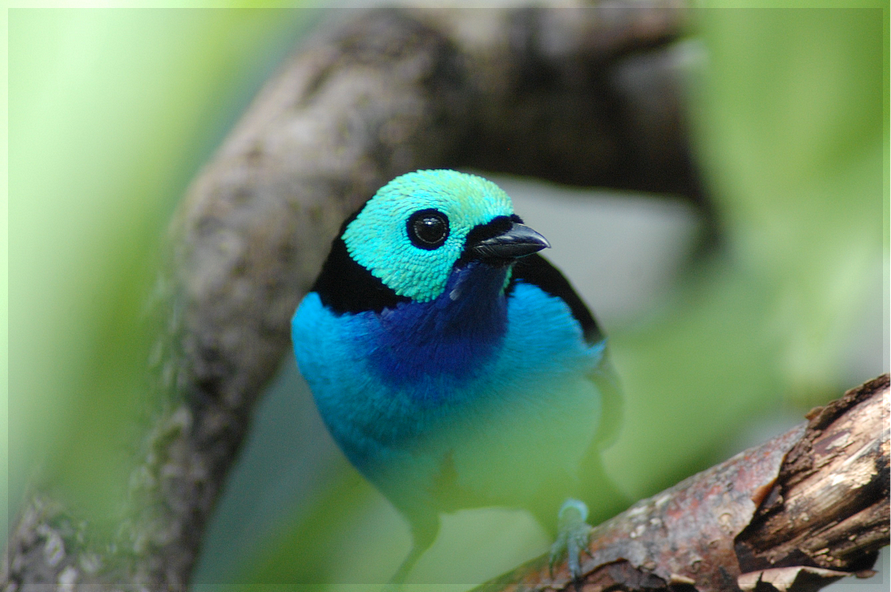 Colorful Bird by whens...