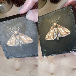 Varnish | Oil Painting | The Golden Moth