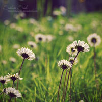 Sunshine by Silviaa92