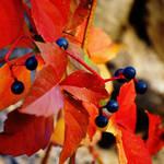 Square Autumn 03