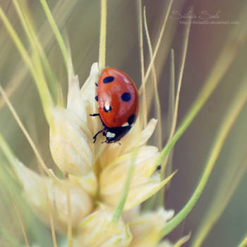 Just let me be your ladybug II by Silviaa92