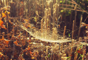 They spun a web for me by Silviaa92