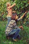 Harvesting in a vineyard