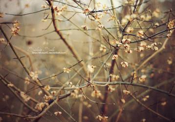Late autumn by Silviaa92